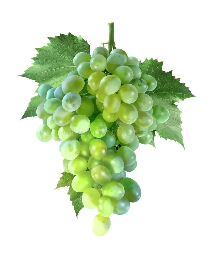 Stor grupp av gröna druvor som isoleras på vit bakgrund arkivbild