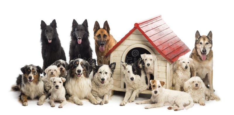 Stor grupp av hundkapplöpning in och omge en hundkoja mot vit bakgrund royaltyfria bilder