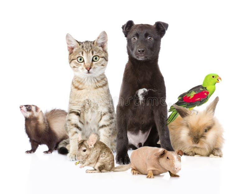 Stor grupp av husdjur bakgrund isolerad white arkivfoton