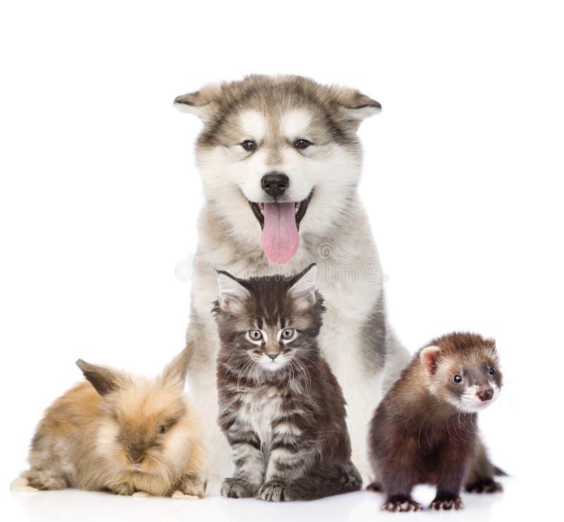 Stor grupp av husdjur bakgrund isolerad white royaltyfria bilder
