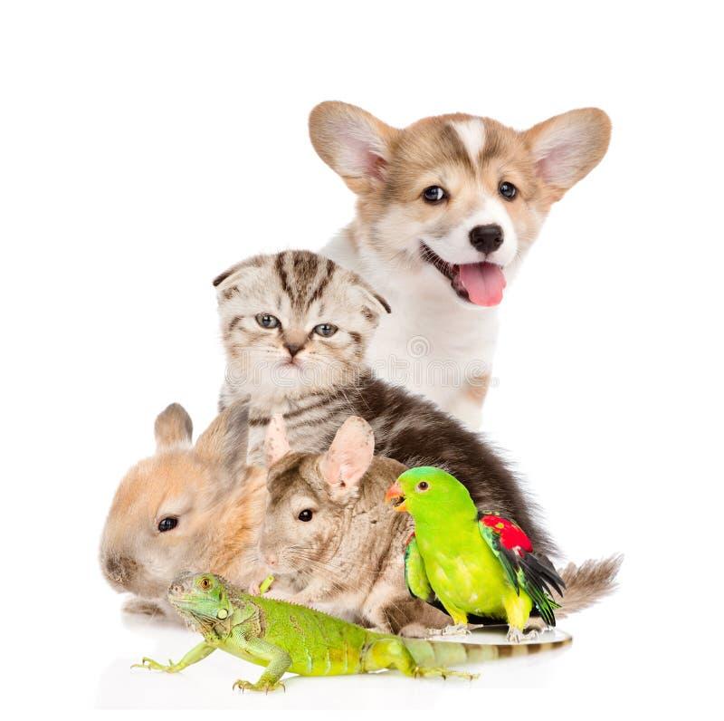 Stor grupp av husdjur På vitbakgrund royaltyfria bilder