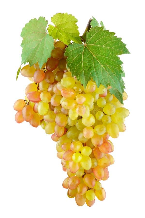 Stor grupp av söta druvor som isoleras på vit bakgrund royaltyfria foton