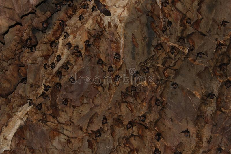 Stor grupp av slagträn i grottan royaltyfri fotografi