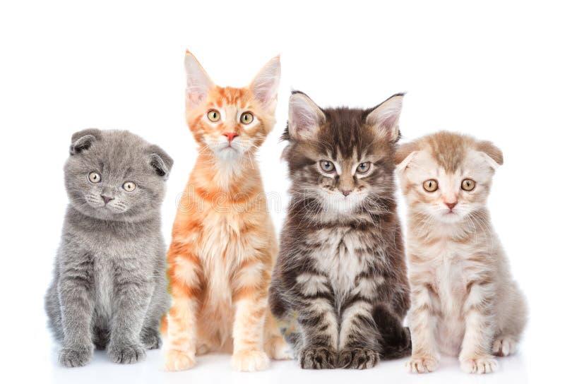 Stor grupp av små katter som framme sitter Isolerat på vit royaltyfria foton