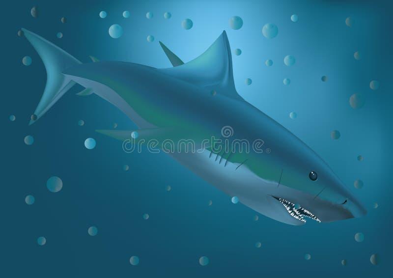 stor hajwhite royaltyfri illustrationer