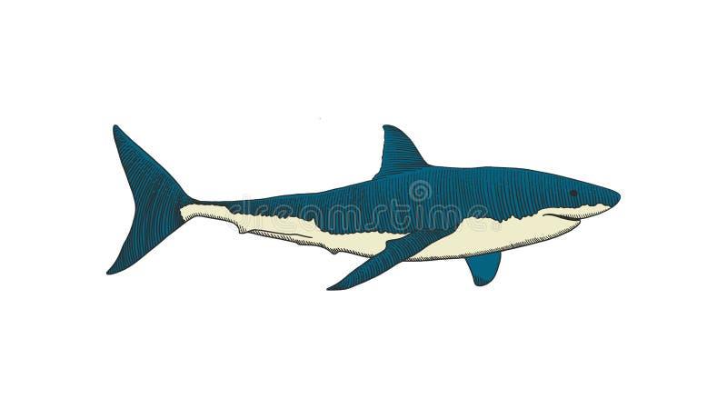 Stor hand f?r vit haj som drar den f?rgrika tappninggravyrillustrationen stock illustrationer