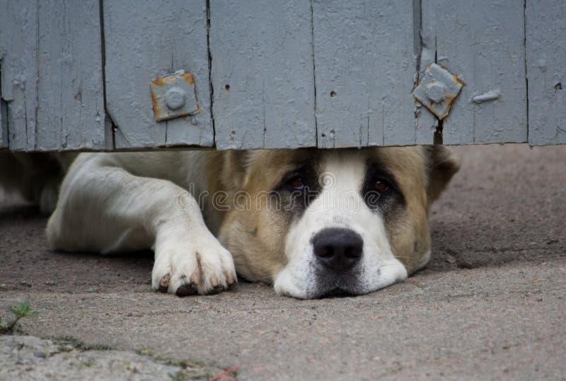 stor hund royaltyfri foto