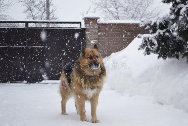 stor hund arkivfoton