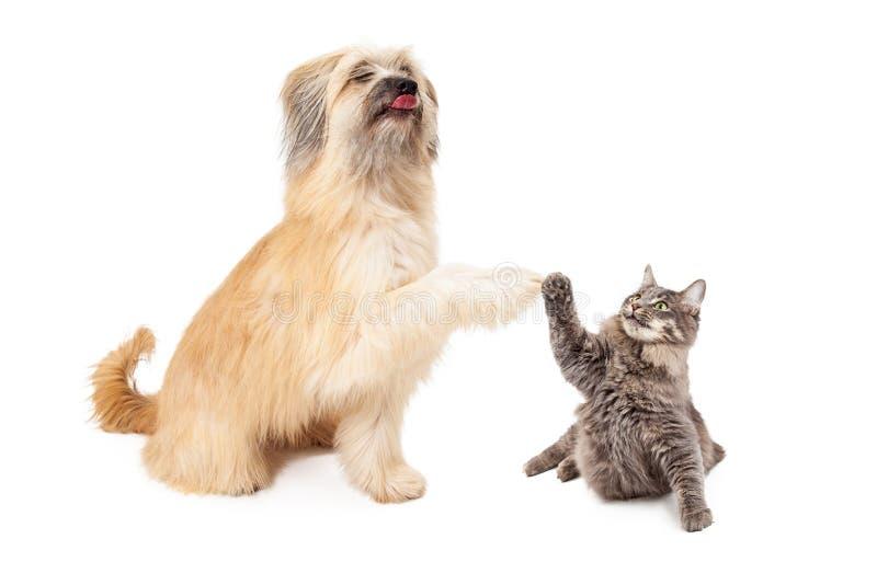 Stor hund och lilla Cat High Five royaltyfria bilder
