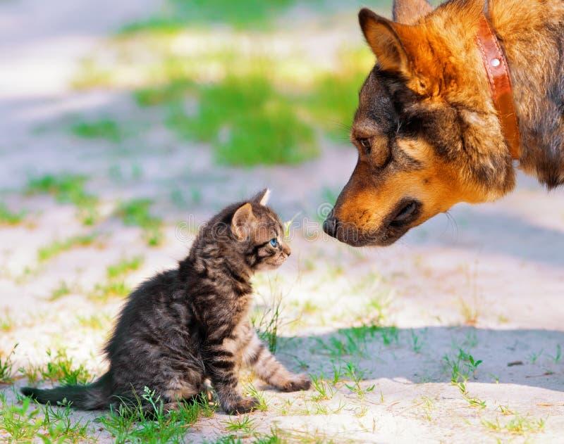 Stor hund och liten kattunge royaltyfria bilder