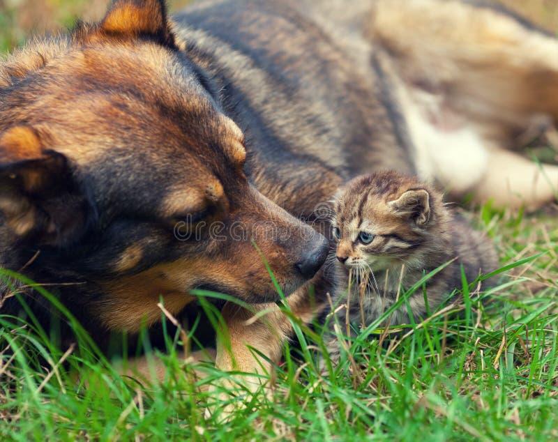 Stor hund och liten kattunge arkivfoton