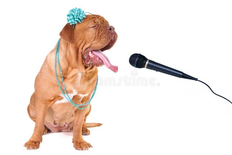 stor hund som loud sjunger ut royaltyfria foton