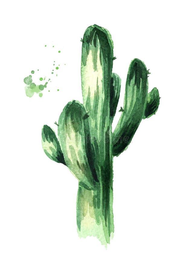Stor kaktusväxt Räcka den utdragna vattenfärgillustrationen som isoleras på vit bakgrund royaltyfri illustrationer