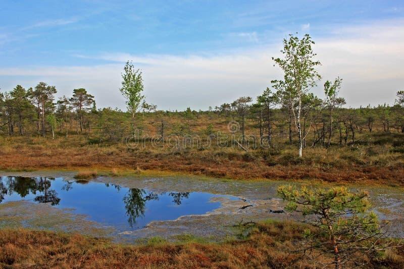Stor Kemeri myr i den Kemeri nationalparken i Lettland arkivbild