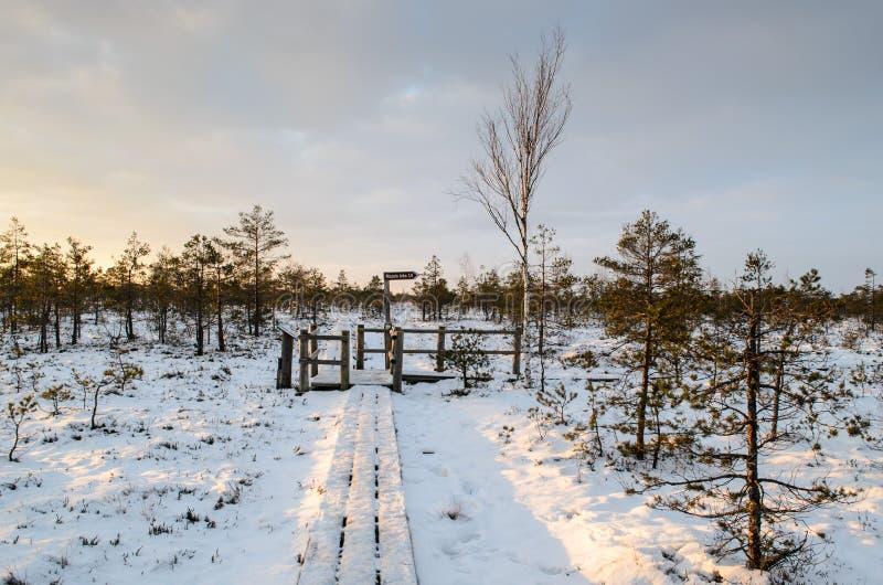 Stor Kemeri myrstrandpromenad i vinter, Kemeri nationalpark, Lettland royaltyfri bild
