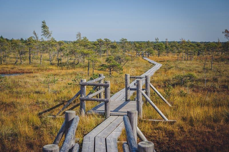 Stor Kemeri myrstrandpromenad, Kemeri nationalpark, Lettland royaltyfria bilder