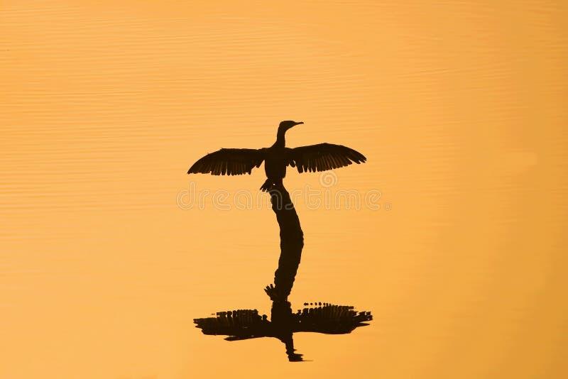 Stor kormoran royaltyfri illustrationer