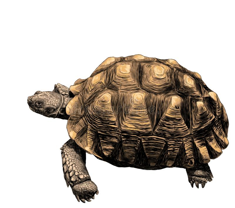 Stor landsköldpadda med det härliga lättnadsskalet stock illustrationer