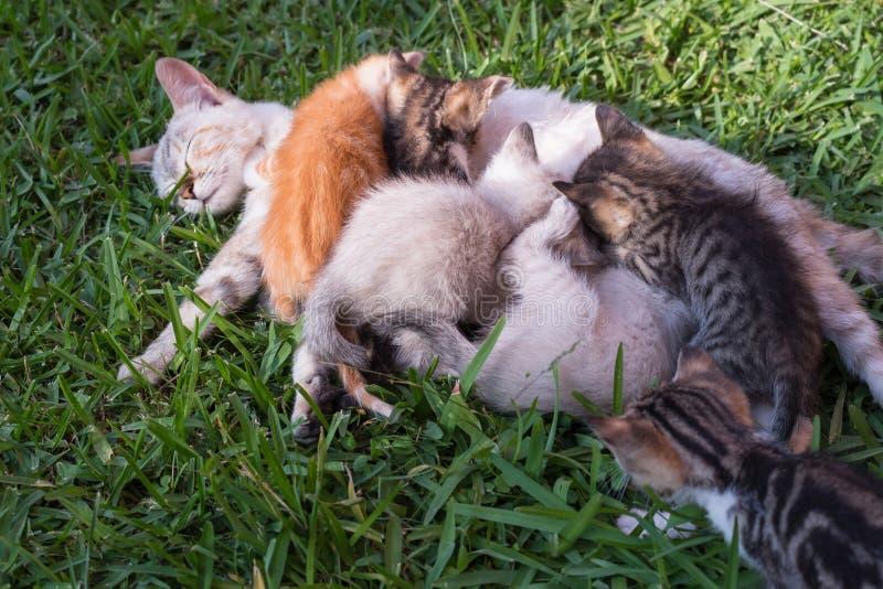 stor liten kattfamiljkattunge royaltyfria foton