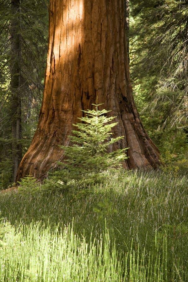 stor liten tree arkivbilder