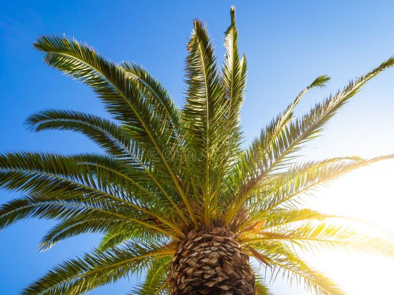 Stor markis av en palmträd med att skina för sol som är ljust till och med den arkivbild