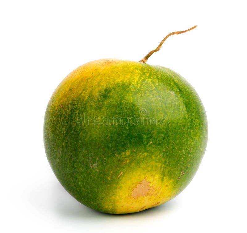 Stor mogen vattenmelon p? isolerad bakgrund arkivbilder