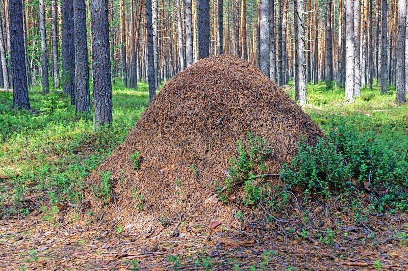 Stor myrakulle i träna arkivfoto