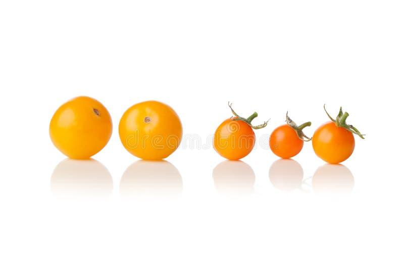 Stor och liten gul körsbärsröd tomat på vit royaltyfri bild