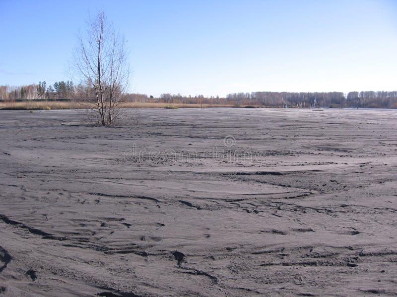 Stor pöl av grå torkad gyttja med produktion för träavfalls arkivbild
