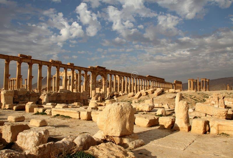 stor palmyra för colonnade royaltyfri bild