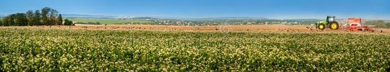 Stor panorama av boveteblomningfältet och med traktoren på horisont arkivbild
