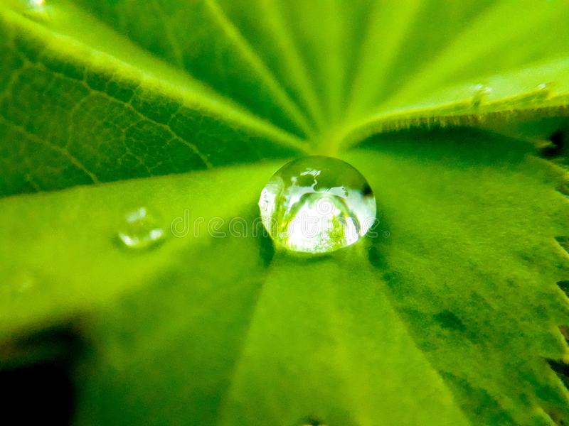 Stor regndroppe på ett blad arkivbild