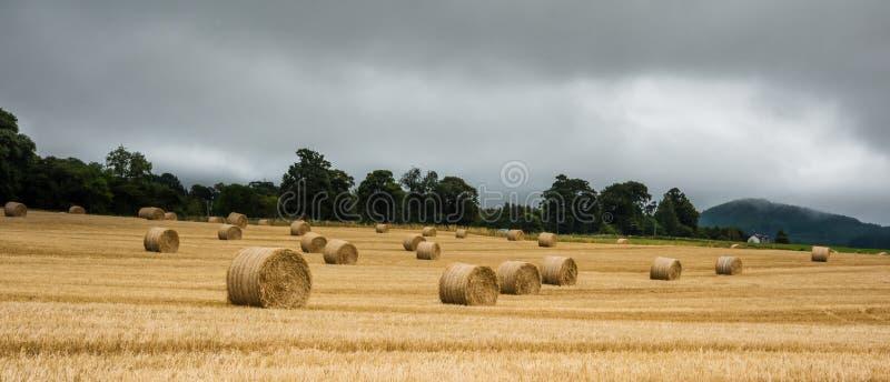 Stor rund sugrörbal på fältet - Skottland royaltyfria bilder