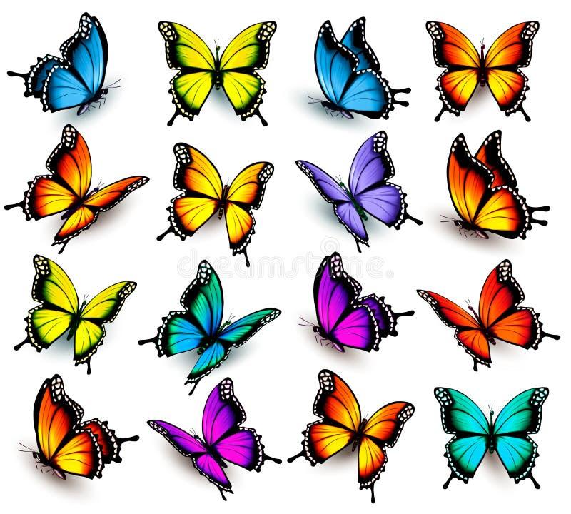 Stor samling av färgrika fjärilar vektor illustrationer