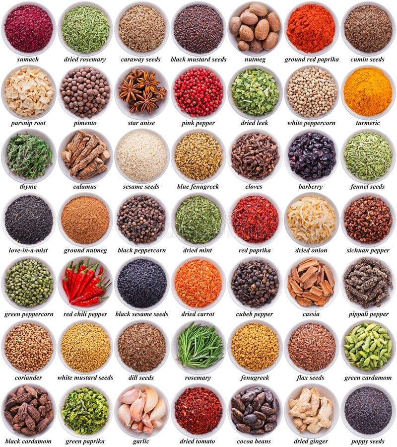 Stor samling av olika kryddor och örter arkivbild