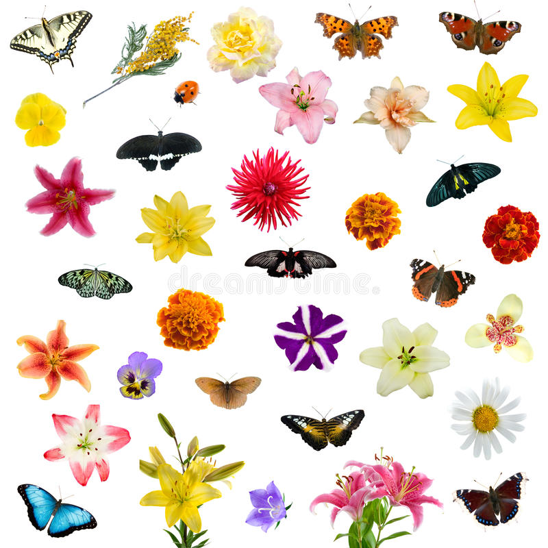 stor set för fjärilsblommor royaltyfria foton