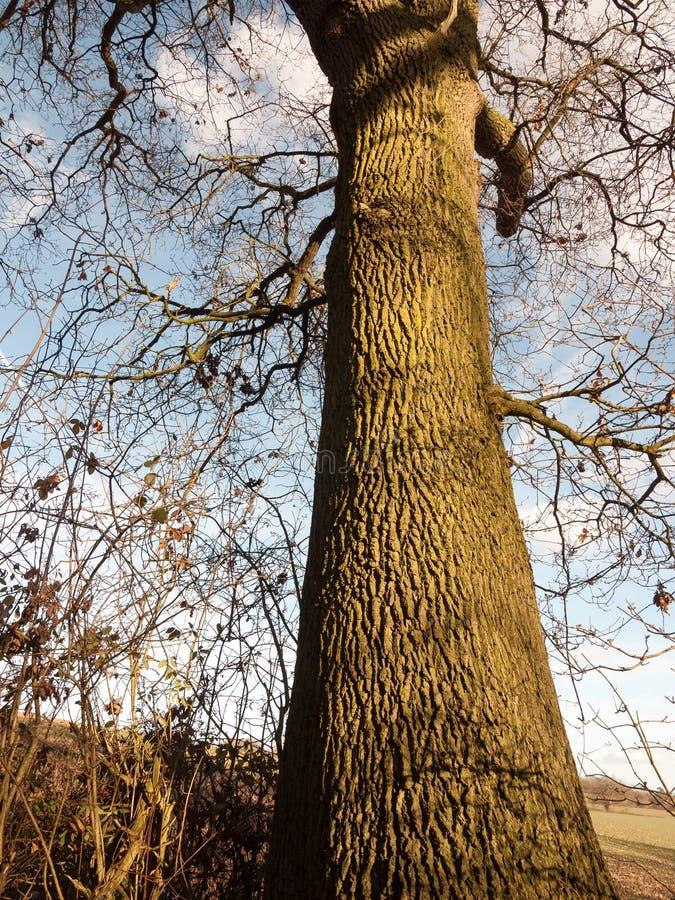 stor sikt av resningskället av trädstammen i den högväxta sikten arkivbilder