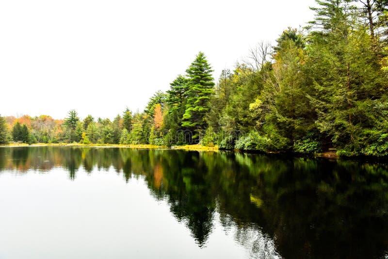 Stor sjö på Front In Forest royaltyfri fotografi