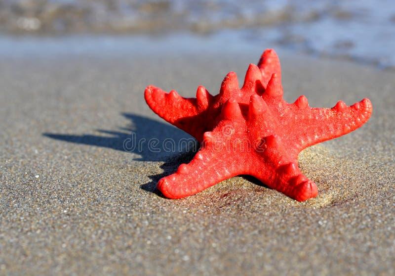 Stor sjöstjärna som ligger på den tropiska havsstranden arkivbilder