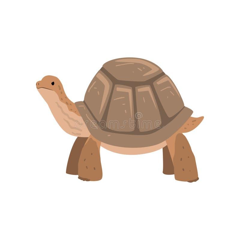 Stor sköldpadda, illustration för vektor för sköldpaddareptil djur stock illustrationer