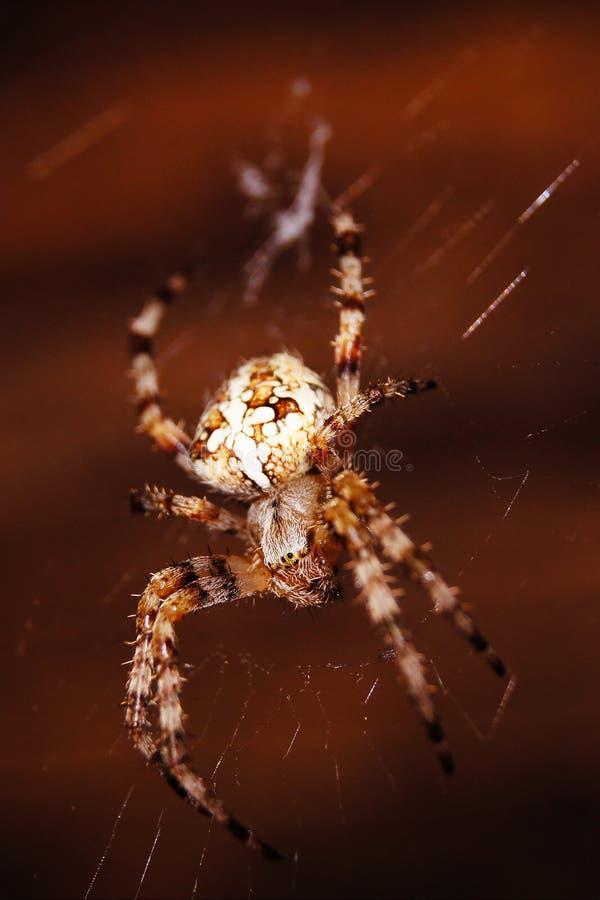 Stor spindel n?ra mitt hem arkivfoton