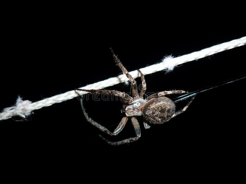 Stor spindel på ett rep royaltyfri bild