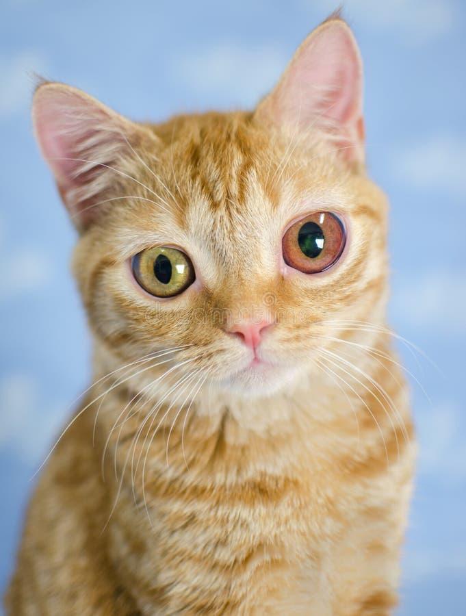 Stor-synad kittie royaltyfria foton