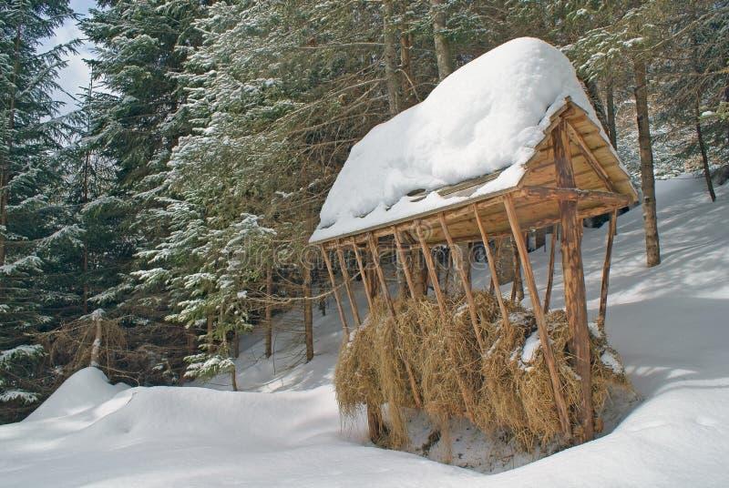 Stor träförlagematarecloseup med hö i vinter royaltyfri foto
