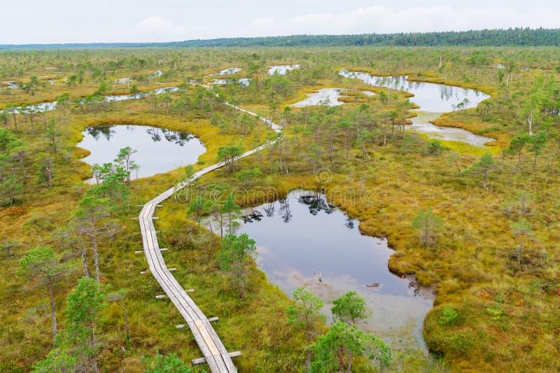Stor träskvåtmarkKemeri nationalpark, Lettland fotografering för bildbyråer