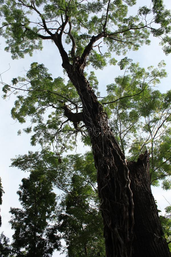 Stor tree. royaltyfri fotografi