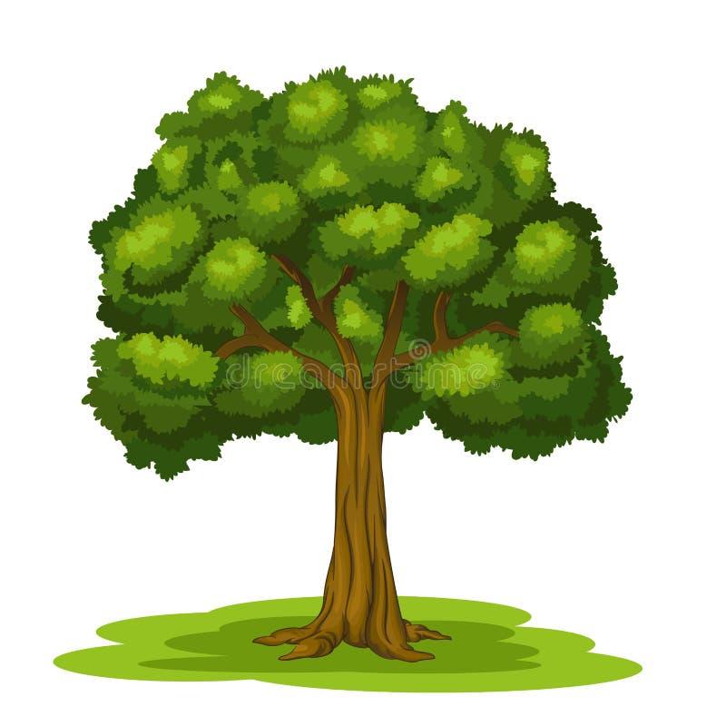Stor tree stock illustrationer