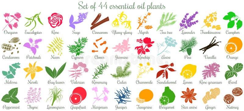 Stor uppsättning av 44 nödvändiga oljeväxter plan stil som är kulör stock illustrationer