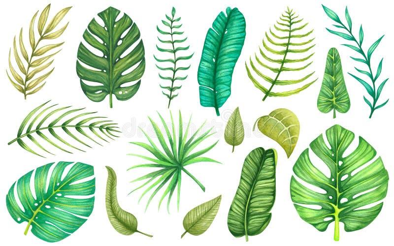 Stor uppsättning med tropiska och exotiska sidor för vattenfärg royaltyfri illustrationer
