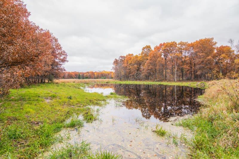 Stor våtmark /grassland med vasser som flödar i vinden som gränsas av höstträd i området för Crexängdjurliv i nordlig Wis arkivbilder
